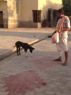 Mohan giving roti to dog in Gokul
