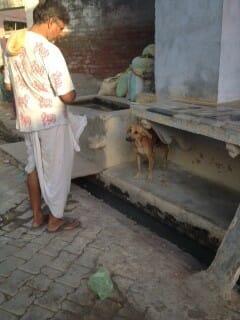 Mohan feeding dog Gokul